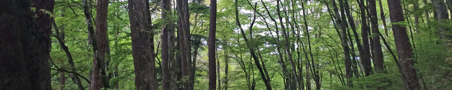 軽井沢町の緑
